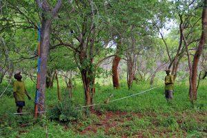 Wald in Simbabwe